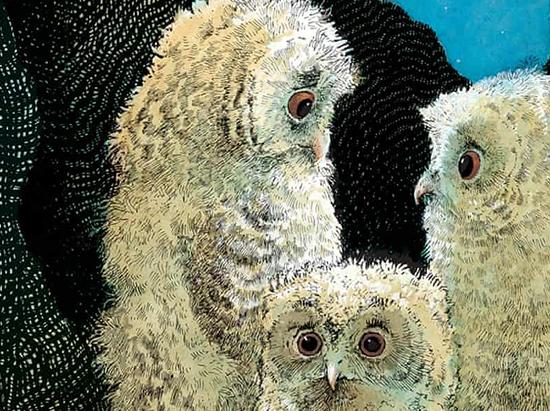 Zeichnung von Waddell: Drei Eulenkinder in der Baumhöhle