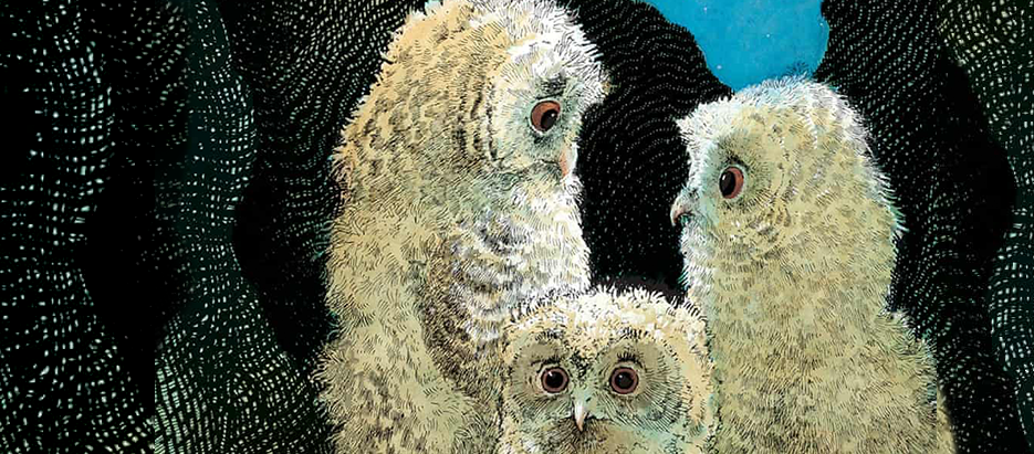 Owl Babies Blog Header