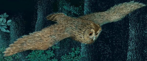 Die Eulenmama fliegt durch die Nacht
