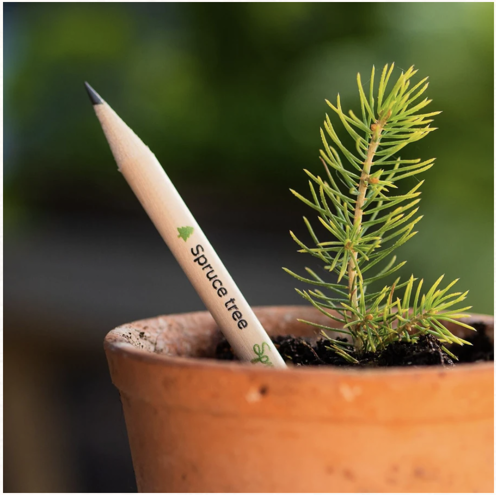Plant a spruce pencil